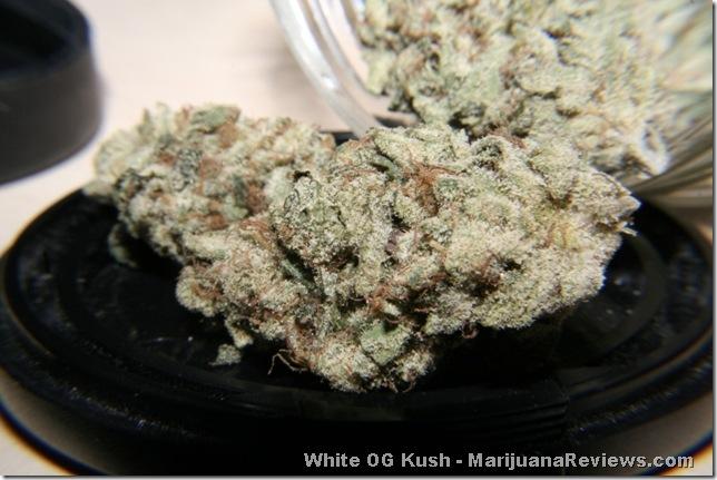 FreshKush White OG KushWhite Og Kush